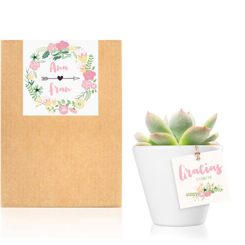 Planta crasa / Cactus mini : Romantic