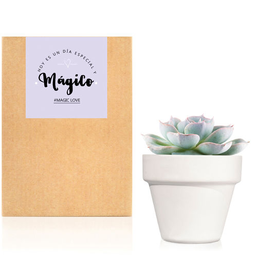 Planta crasa / Cactus mini : Trendy