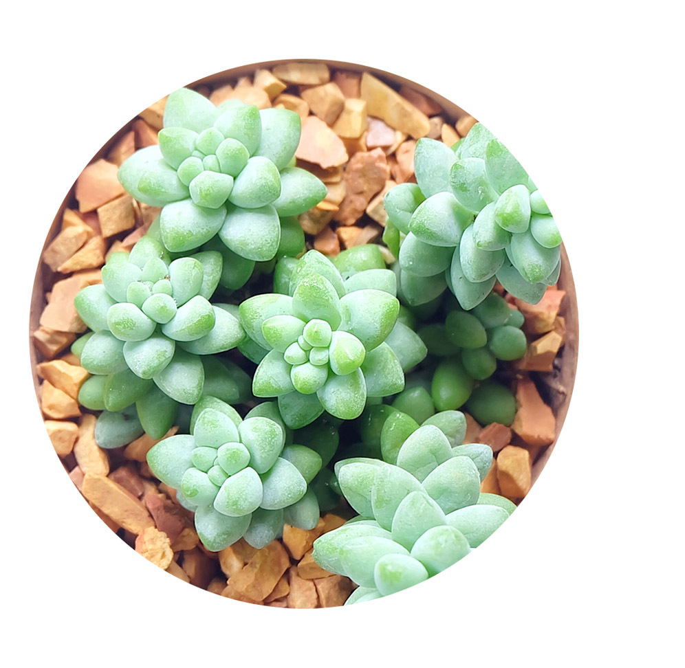 Plantas suculentas bodas planta crasa cactus mini nature for Plantas crasas interior